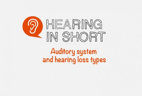 Auditory system and hearing loss types